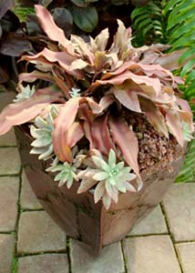 Bromeliads and echeveria are safe plants to have around your four-legged friends.