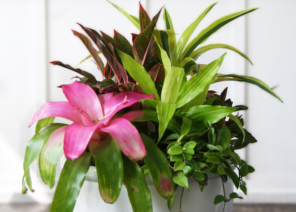 Combining Houseplants for Decorative Arrangements