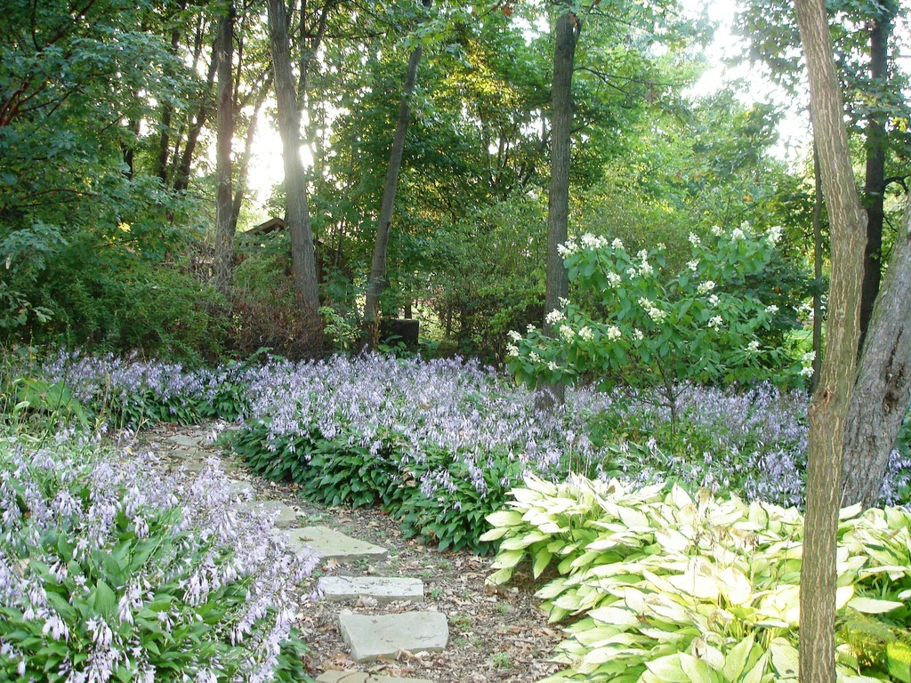 Best Plants Under A Pine Tree : Tips tricks for keeping groundcover under control zillow porchlight