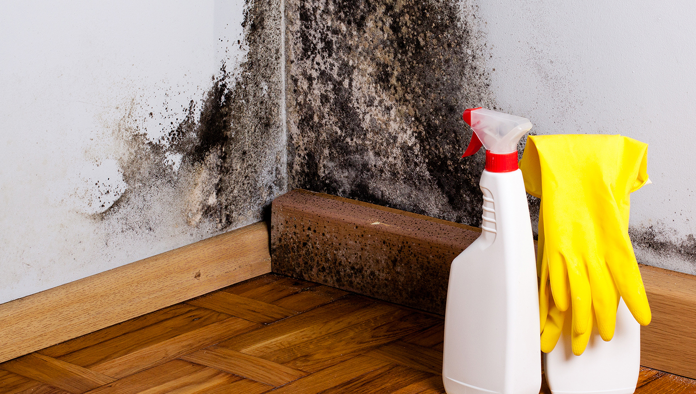 Fighting mold in the bathroom