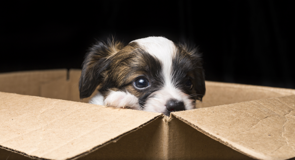 compile a dog move kit to make moving easier for pooch