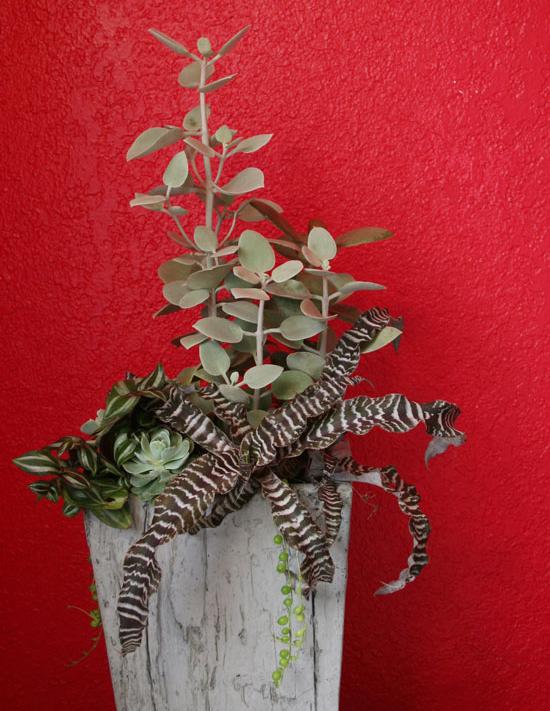 Combining Houseplants for Decorative Arrangements - 웹