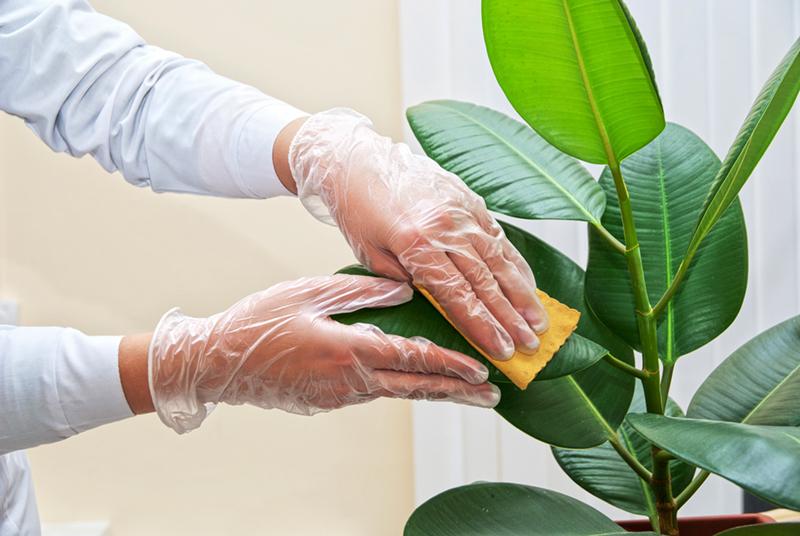 подробные какие растения опасны для собак къен дешнашна,бац