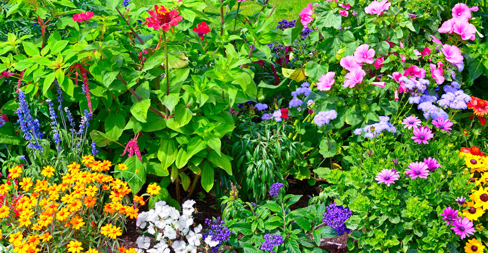 9 Tips for Preparing a Fabulous Flower Bed