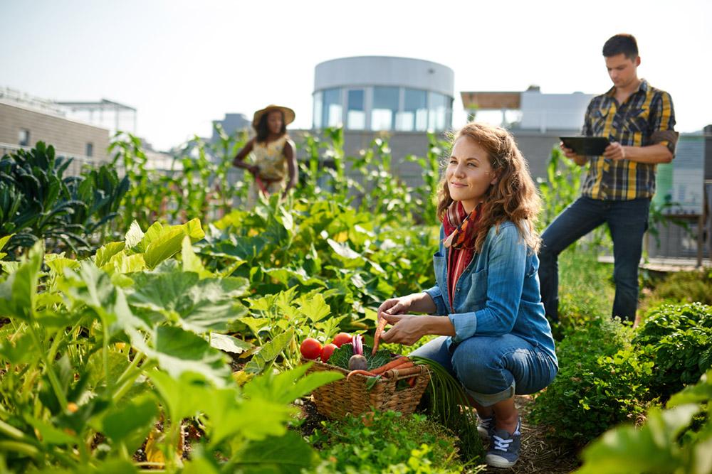 Dig Into Community Gardening