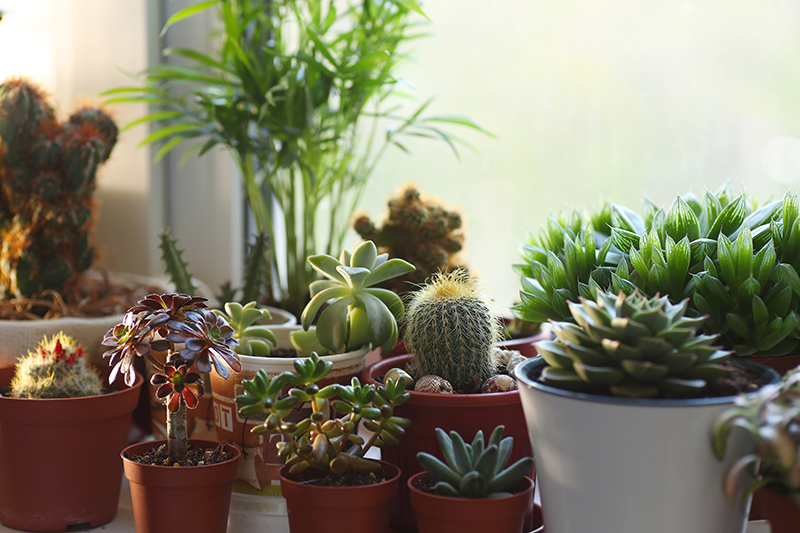 Can Houseplants Really Clean the Air?