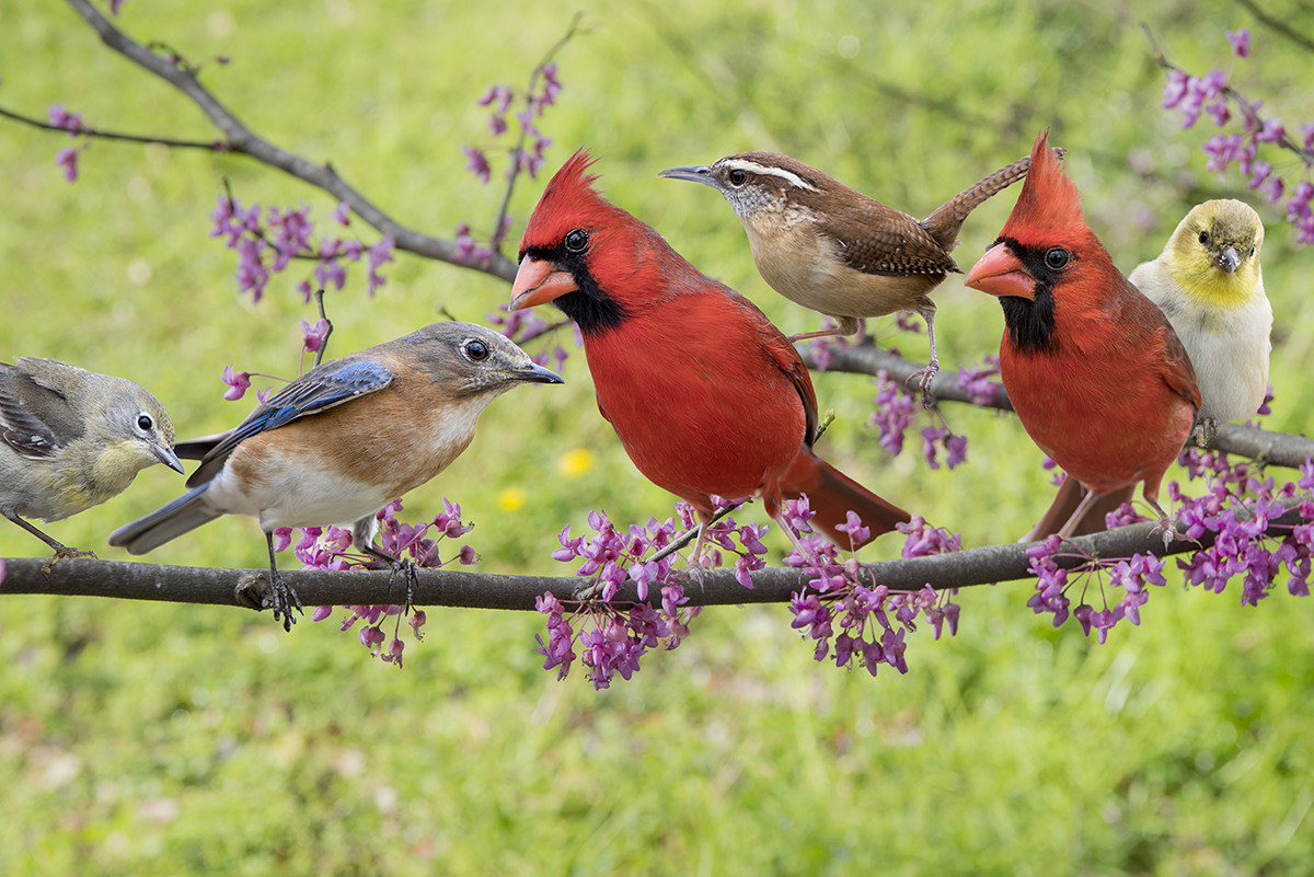 How to Attract Birds to Your Yard (Hint: Don't Just Wing It)