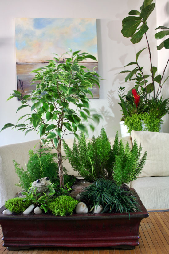 Combining houseplants for decorative arrangements for Garden arrangement of plants