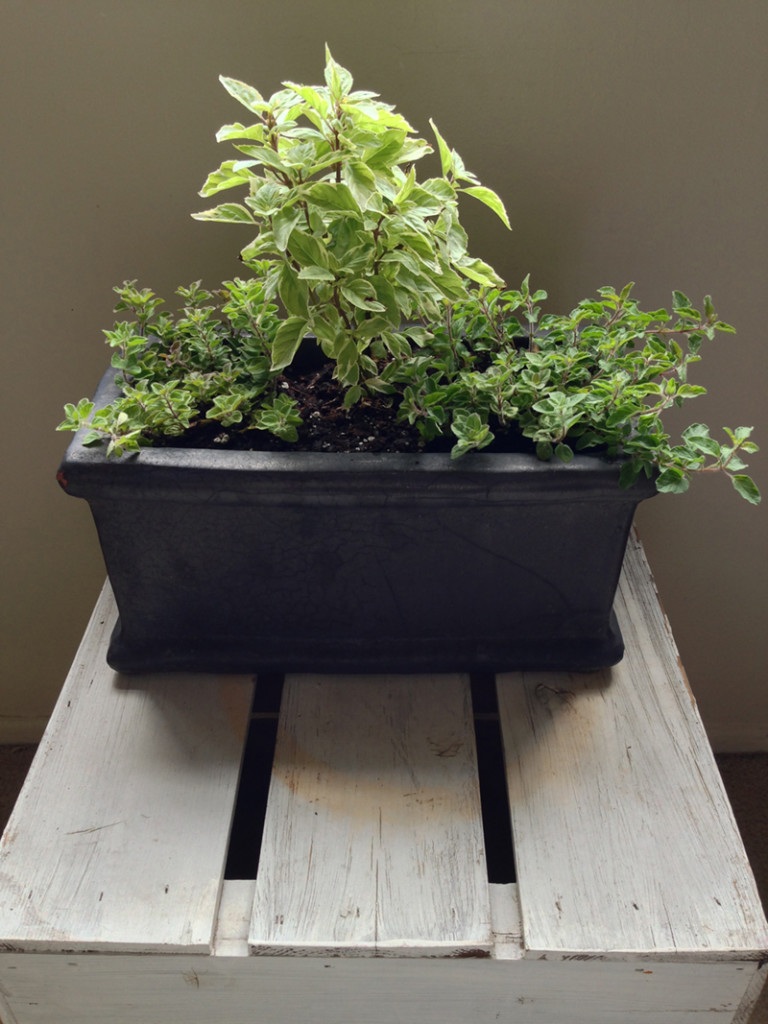 Secrets to a thriving indoor herb garden Kitchen windowsill herb pots