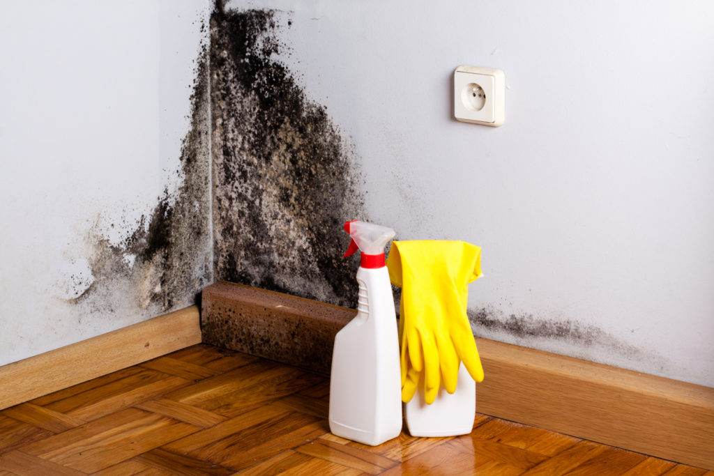 Black Mold In Walls mold removal - how to get rid of black mold | zillow digs