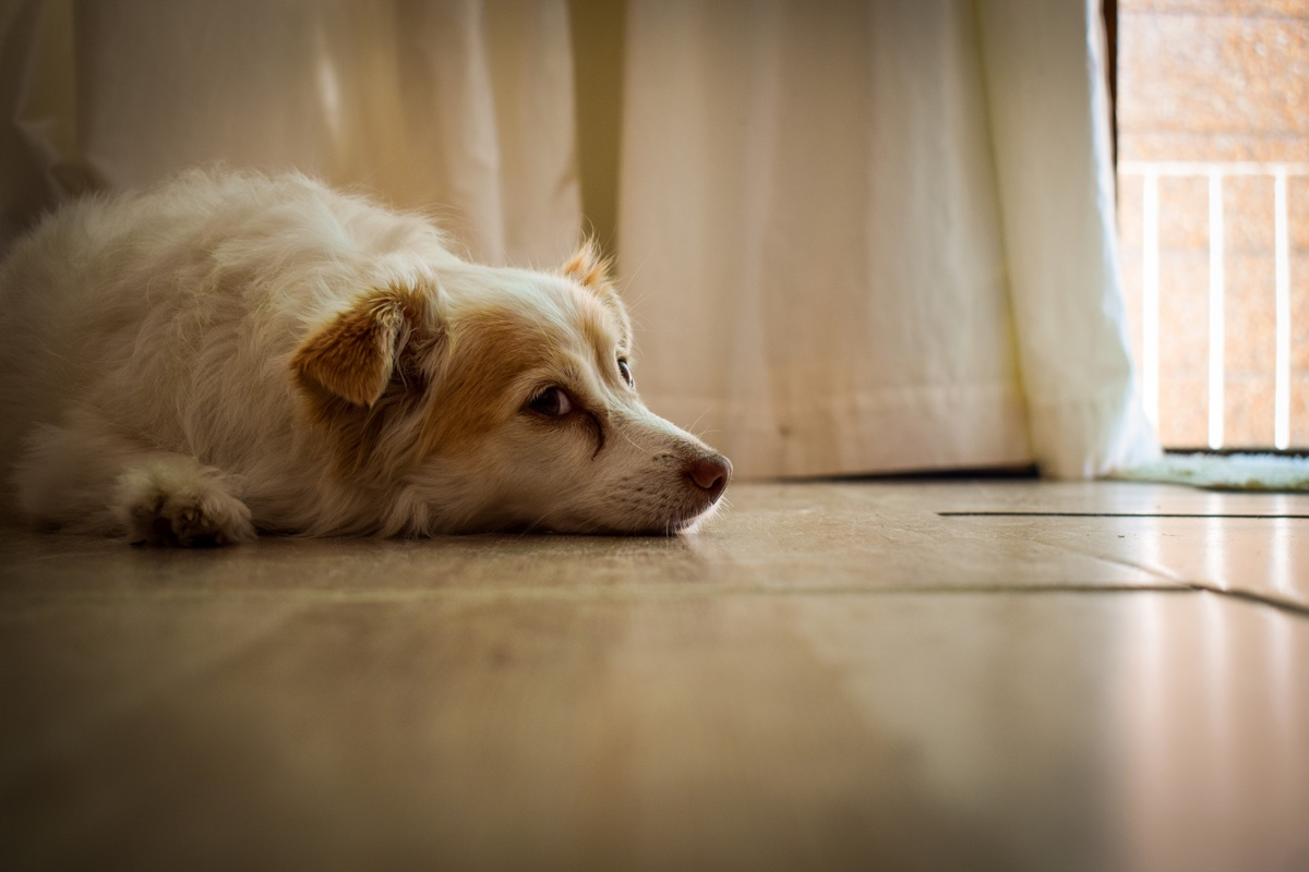 image of puppy apartment