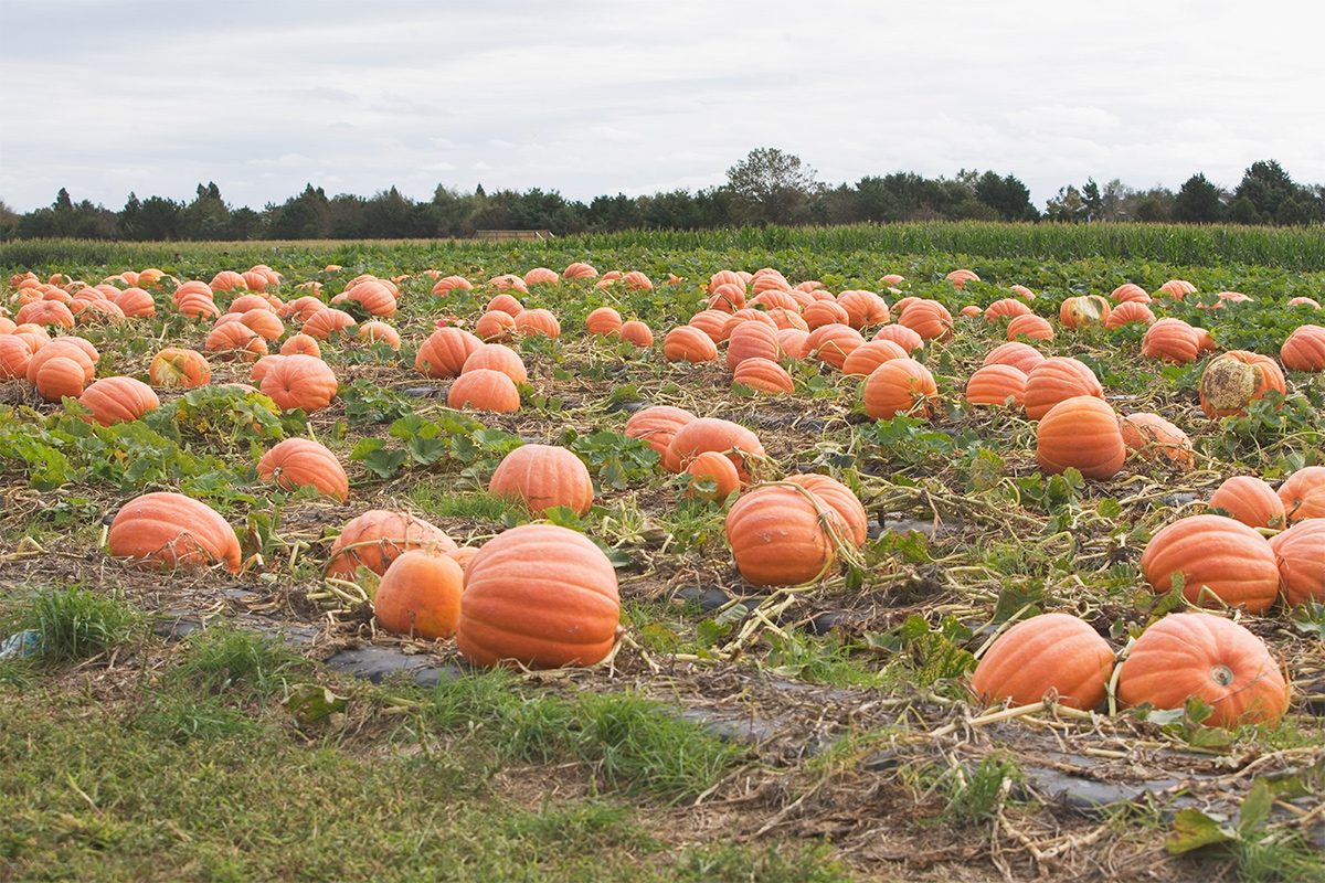 image of fall activities in the hamptons
