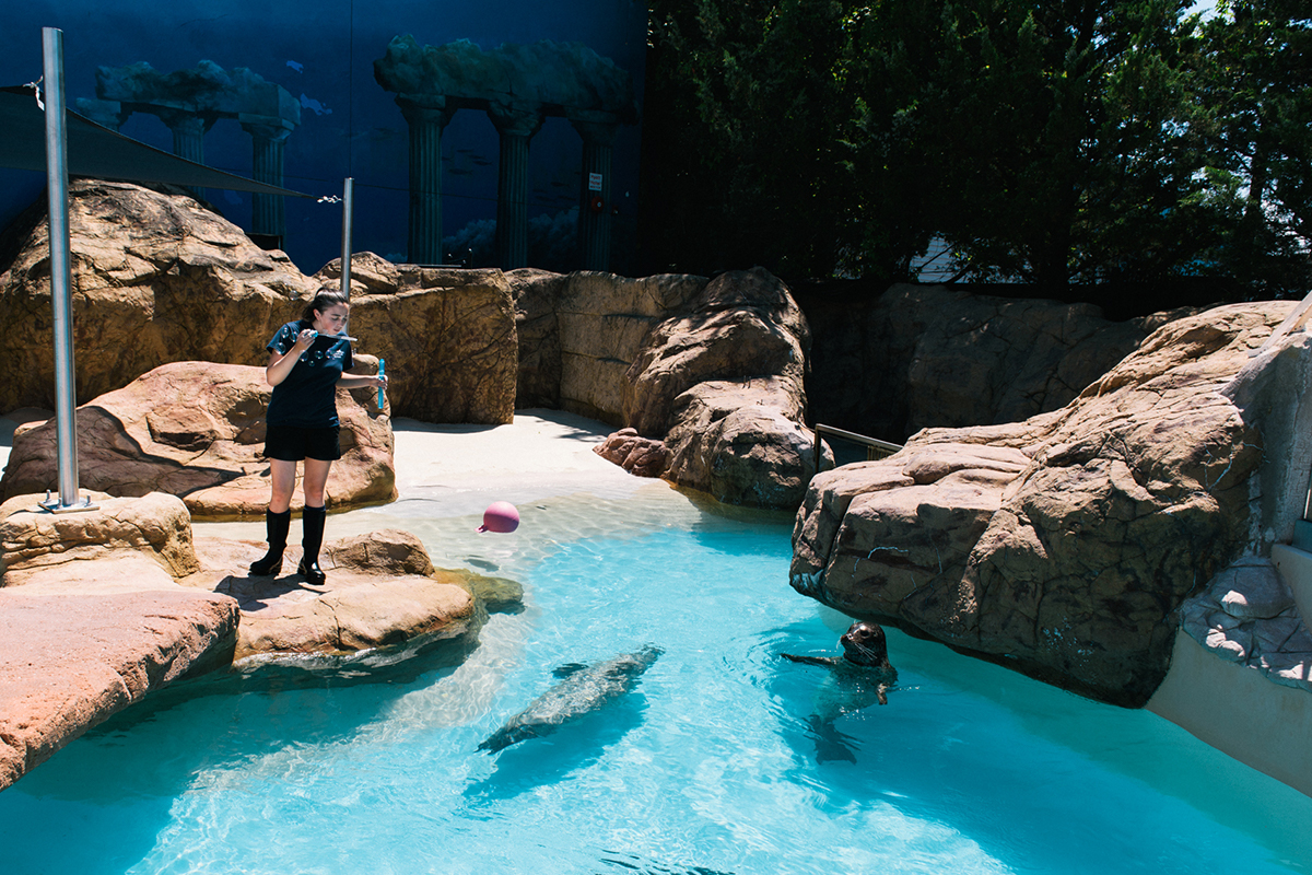 image of long island aquarium