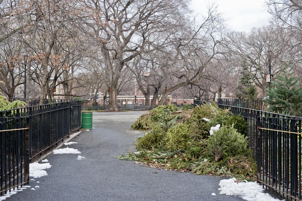 Christmas Tree Disposal Nyc