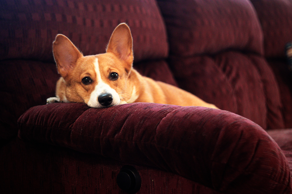 Apartment Cleaning Tips for Pet Owners Living in Small Spaces