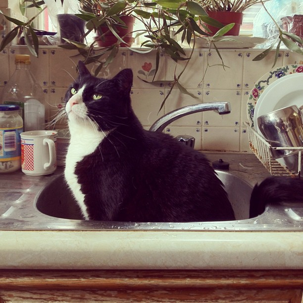 Apartment Kitchen Sink Clogged: How To Unclog A Sink Drain