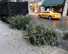 christmas-tree-near-dumpster