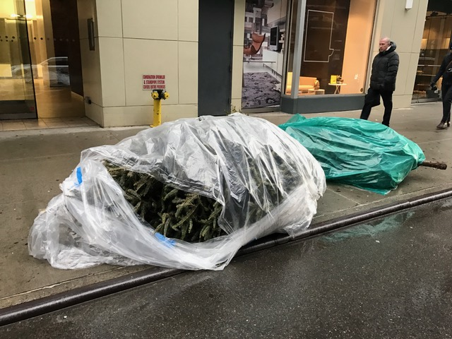 Guide to Christmas Tree Disposal in NYC | StreetEasy