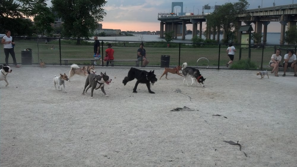 Off Leash Dog Parks Nyc