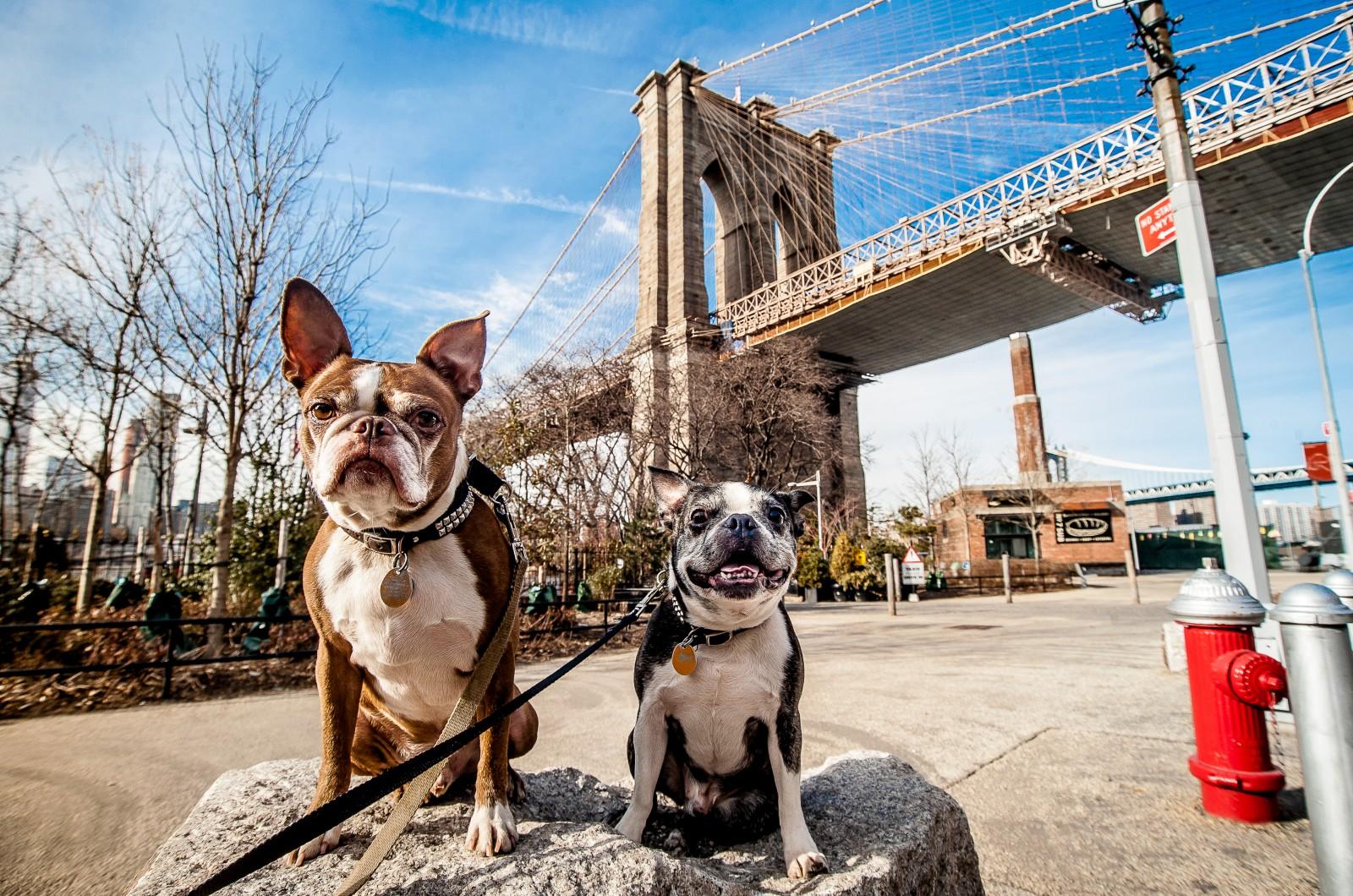NYC's Most Dog-Friendly Neighborhoods | StreetEasy