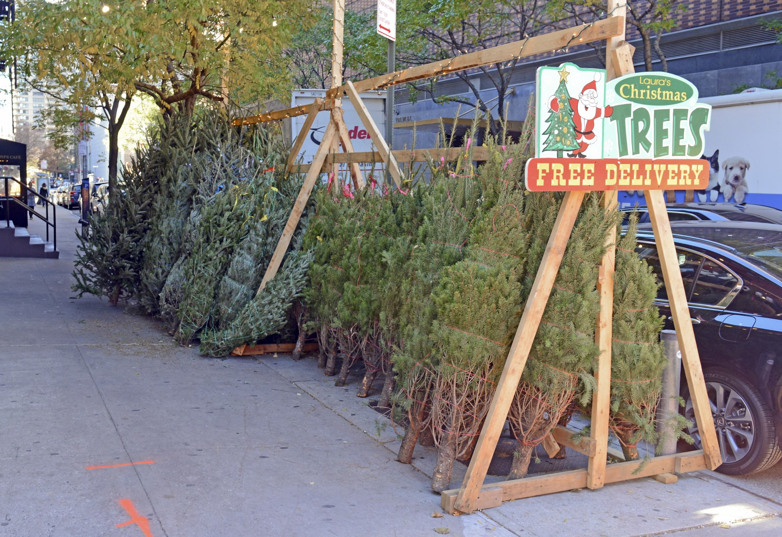 Christmas Trees NYC: The Best, Cheapest Vendors In The