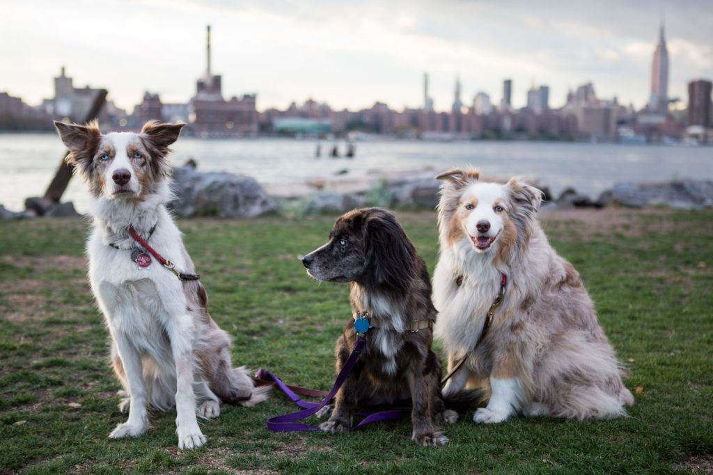 Best Manhattan Dog Parks