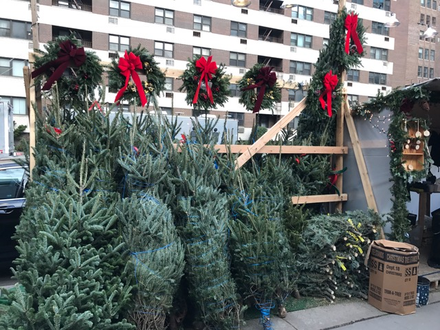 Christmas trees along 7th Avenue - What Type Of Christmas Tree Should You Get In NYC? StreetEasy
