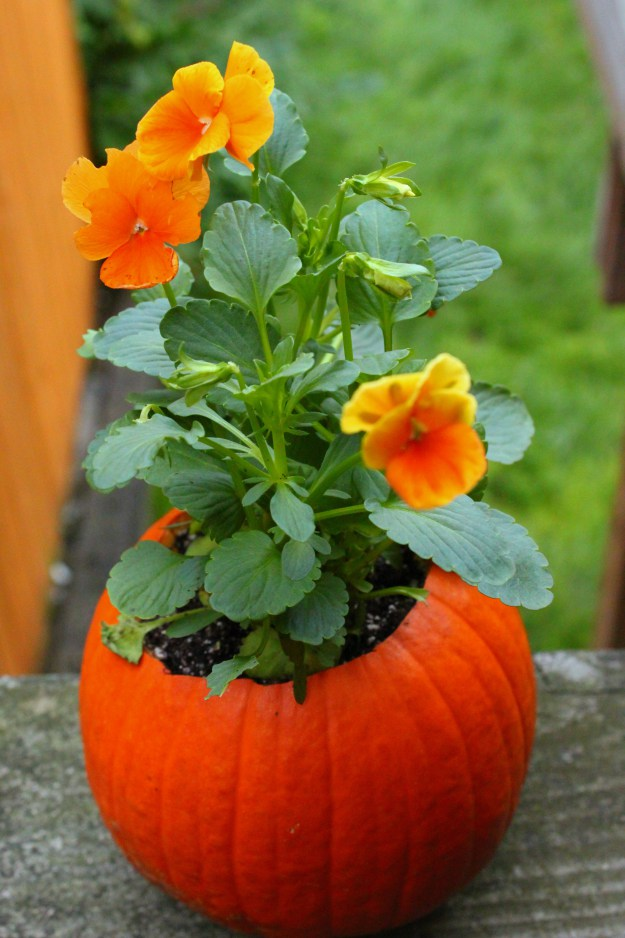 flower in pumpkin