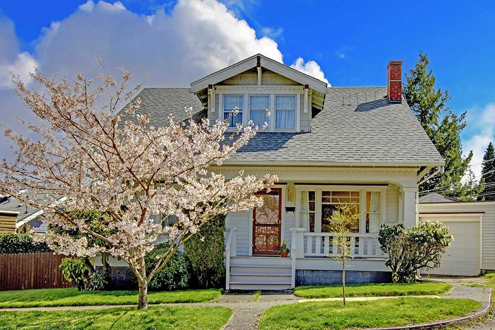 A blossoming cherry tree in front of a house on a sunny day.