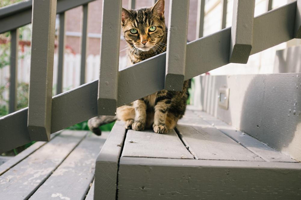 Cat peering through railing