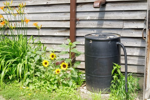 rain barrel next to garden