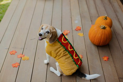 dog in hot dog halloween costume