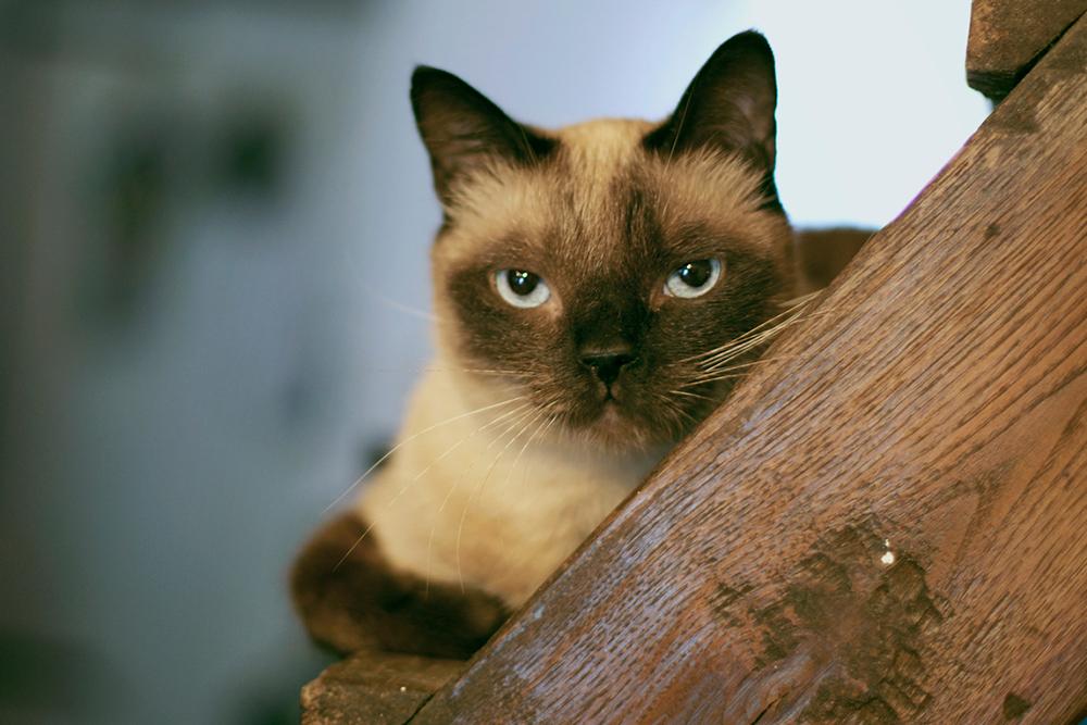 grumpy looking cat