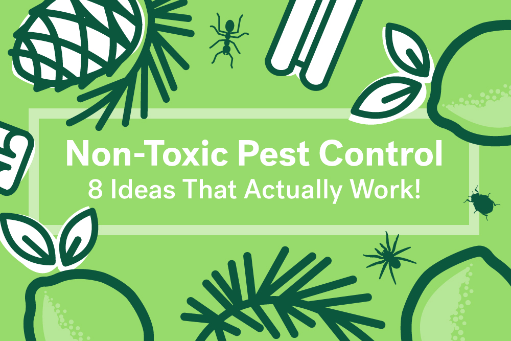 natural pest control ideas