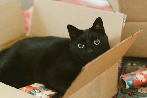 black cat in moving box
