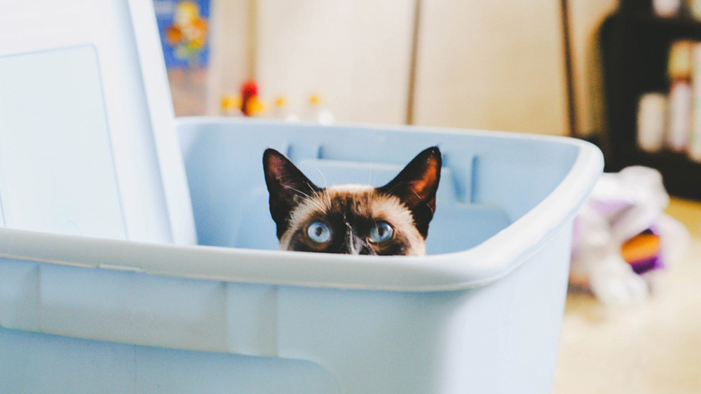 cat hiding in storage bin - reasons to start your house search