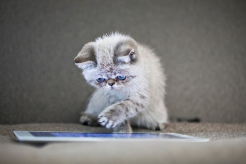 kitten using tablet searching for a mortgage broker