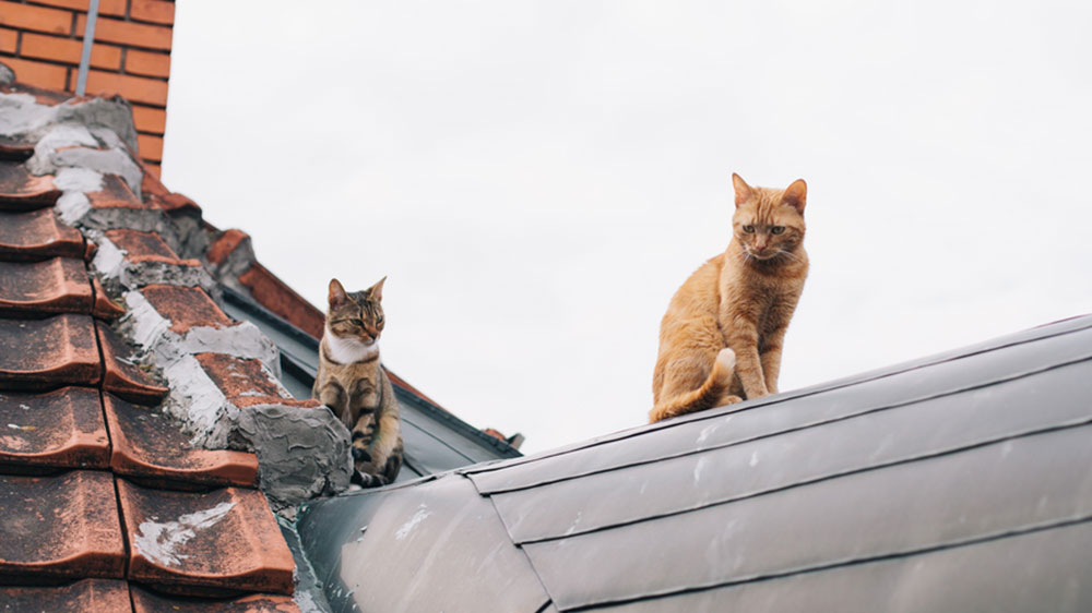 cats on a roof, roof inspection