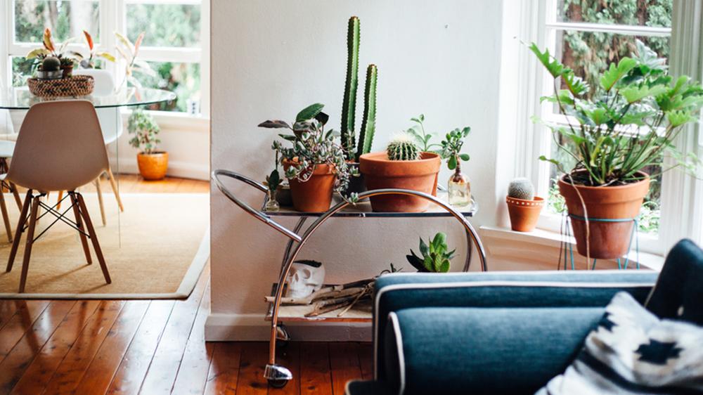 zen decor cactus plants