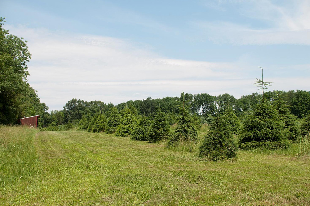 8 Christmas Tree Farm Homes For Sale — Life At Home ...